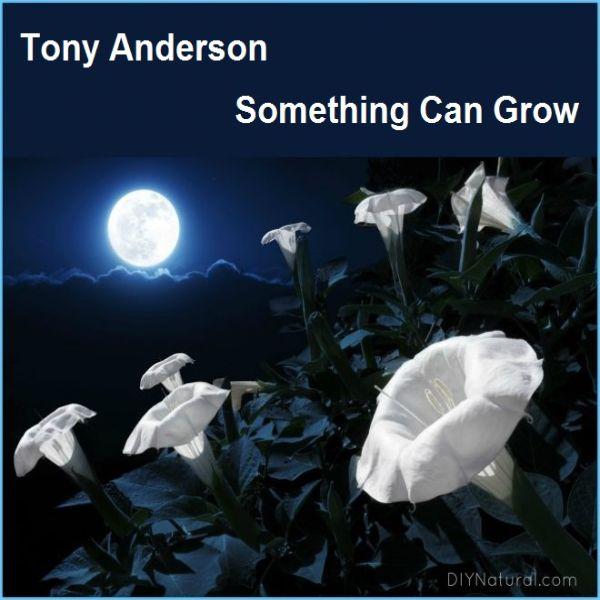 دانلود آهنگ بی کلام (تونی اندرسون) Tony Anderson با نام Something Can Grow